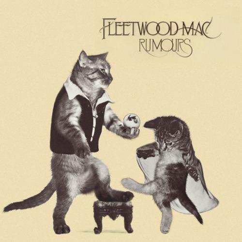 Rumours Kitten