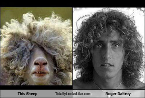 Roger Daltrey Sheep